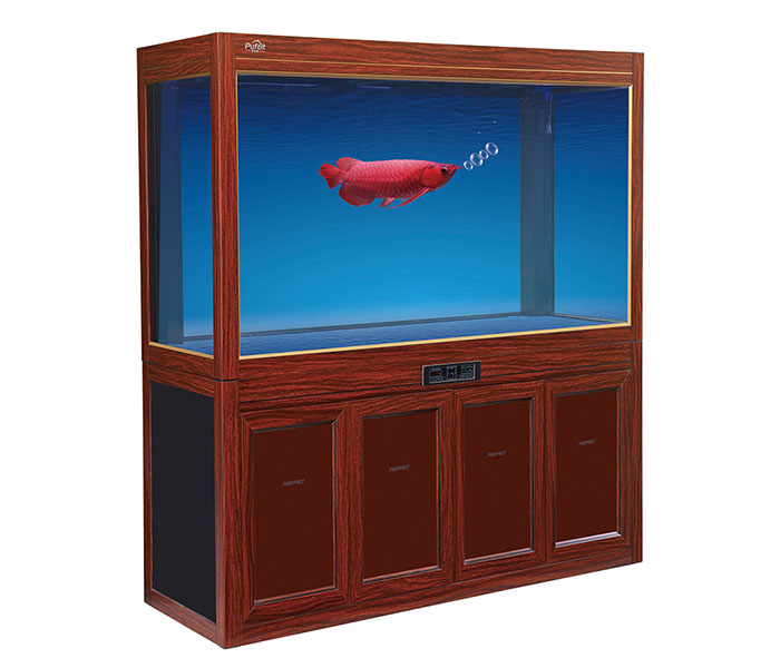 Arowana Large Glass Fish Tank